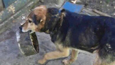 Photo of Приносив свою миску, як тільки бачив людей: про життя ніжинського собаки