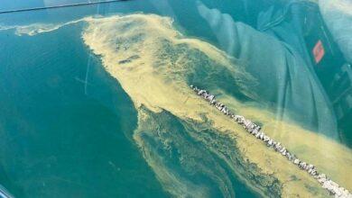 Photo of Вода, як кисіль, і лякає запах: у Чорному морі радять не купатися