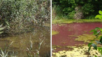 Photo of Що виявило лабораторне дослідження водойми у Графському парку?