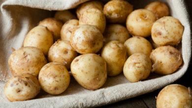 Photo of Найдешевша молода картопля в Ніжині
