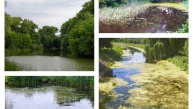 Photo of Водойми Ніжина: красиво і сумно водночас…