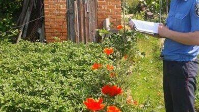 Photo of У двох господинь в Ніжині виявили незаконні посіви маку
