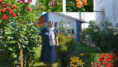 Photo of У Ніжині в Покровському храмі є свій райський сад. Фото