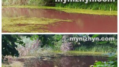 Photo of Вода в ставку-копані Графського парку не відповідає нормам