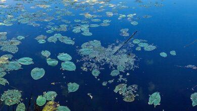 Photo of Мор риби під Миколаєвом: кілометр берегу всіяний мертвими бичками