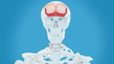 Photo of Коронавірус вражає клітини мозку – дослідження Університету Джона Гопкінса