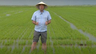 Photo of Рис, нут і шафран: через зміну клімату в Україні приживаються нові агрокультури