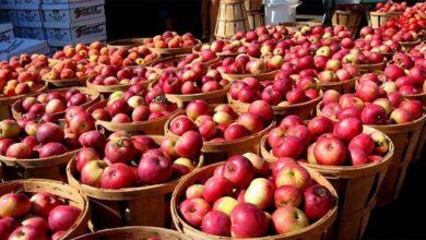 Photo of Коли святкують Яблучний спас 2020 – дата