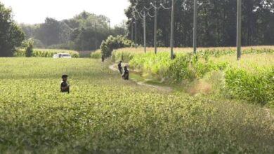 Photo of Ліквідація полтавського терориста: ДБР почало досудове розслідування