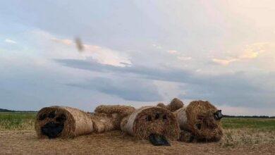 Photo of Розірвали «ведмедика»: на Чернігівщині вандали знищили популярну фотозону