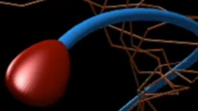 Photo of 350 років помилкових досліджень: вчені дізналися, як рухаються сперматозоїди