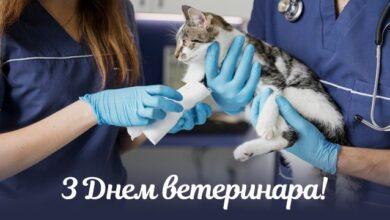 Photo of Привітання з Днем ветеринара в листівках