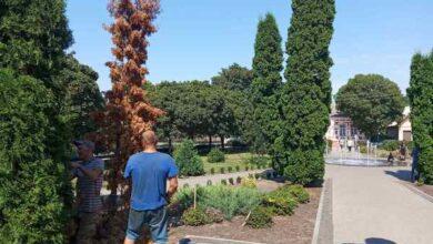 Photo of У Ніжині видаляли сухостійні аварійні дерева. Фото
