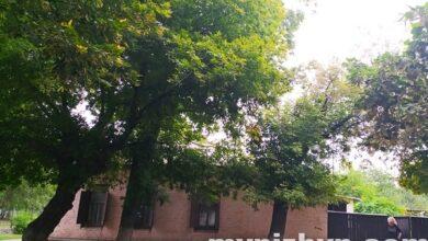 Photo of Роками поруч з небезпекою: як ніжинці живуть у тіні аварійного дерева