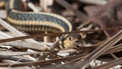 Photo of У Дагестані в жінку заповзла змія: як лікарі її діставали (18+)