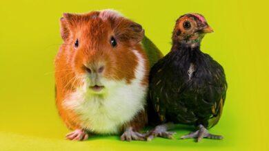 Photo of Найкращі друзі тварин: милі привітання з Днем ветеринара в СМС