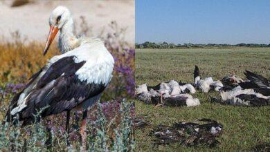 Photo of На Одещині потужний град вбив сотні диких птахів на Тузловських лиманах
