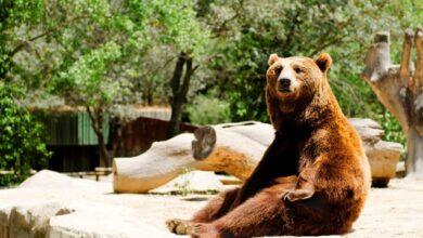 Photo of Конфіскованих тварин не продаватимуть на аукціонах, їх передадуть у притулки – Мін'юст