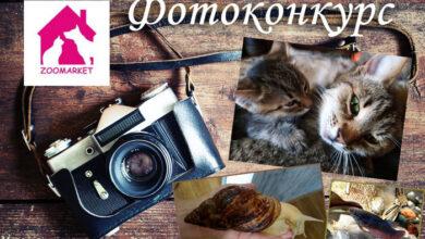 """Photo of Фотоконкурс """"Мій домашній улюбленець"""" від сайту Mynizhyn.com та ЗооМаркету"""