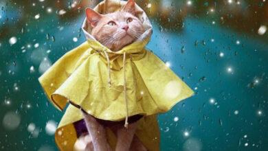 Photo of Різке похолодання: синоптики попереджають про погіршення погоди у Ніжині