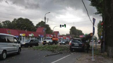 Photo of У Ніжині буревій накоїв лиха: дерево впало на авто. Фото