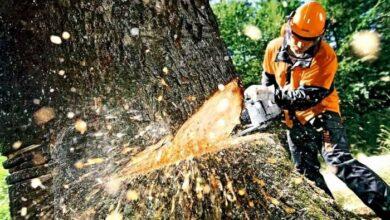 Photo of На території Ніжина видалять 42 дерева: перелік адрес