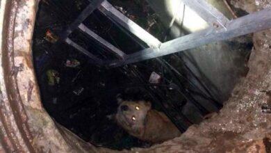 Photo of У Ніжині з шахти колодязя рятували собаку
