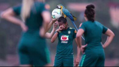 Photo of Сів на голову: папуга ара перервав тренування футболісток збірної Бразилії