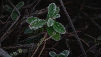 Photo of Похолодання в Україні: коли нагрянуть перші заморозки