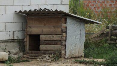 Photo of За дві лапи – і об асфальт: на Полтавщині чоловік вбив собаку на очах хрещениці