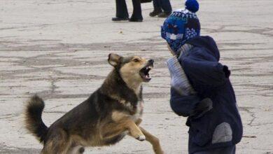 Photo of На Донеччині хлопчика покусала собака, дитину евакуювали на вертольоті у Дніпро