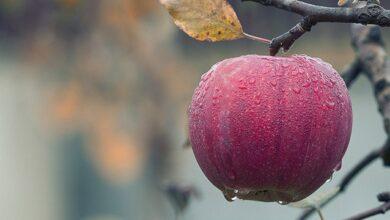 Photo of Врожай яблук в Україні 2020: ціни, які корисніші та як обрати