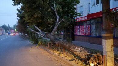 Photo of Центр міста залишився без світла через величезну березу