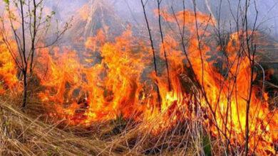 Photo of По вулиці Кунашівській сталася пожежа сухої трави