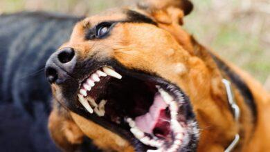 Photo of У Ніжині домашній пес покусав свою господарку