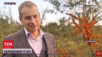 Photo of Про природний антидепресант, який вирощують на Ніжинщині. Відео
