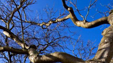 Photo of Ніжинець травмувався, впавши з дерева на своєму подвір'ї