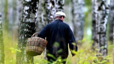 Photo of На Ніжинщині заблукав 82-річний грибник