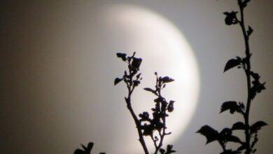 Photo of Повний місяць у листопаді 2020 року: дата і що не можна робити