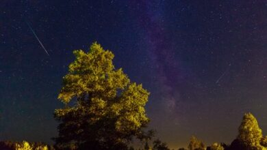 Photo of Зорепад Оріоніди: вночі можна побачити метеори комети Галлея