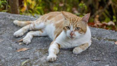 Photo of У Рівненській області скажений кіт відправив кілька сіл на карантин