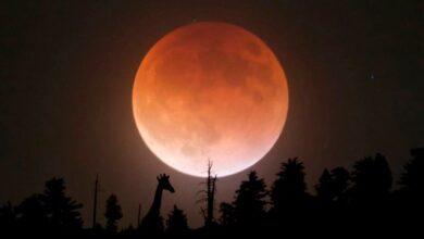 Photo of Місячний календар на листопад 2020: рекомендації та сприятливі дні