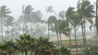 Photo of Повалені дерева, зірвані дахи та жертва: Новий Орлеан накрив потужний ураган
